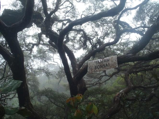 nampak signage ni maka dengan rasminya kami dah sampai kat simpang taman bonsai