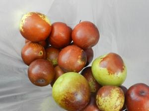 buah ni macam bush bidara pun ada, macam epal hijau yang kecik pun ade..